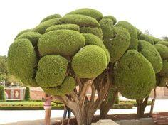 gaudi trees - Google Search