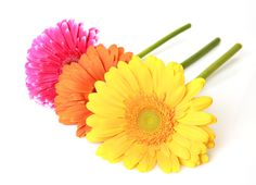 gerbera backround free for desktop (Kerwin Birds 4695x3393)