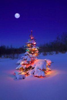Christmas Tree Glowing Under The Northern Lights Canvas Art - Carson Ganci Design Pics x Christmas Tree Images, Christmas Tree With Snow, Christmas Scenes, Noel Christmas, Winter Christmas, Christmas Lights, Christmas Decorations, Canada Christmas, Magical Christmas