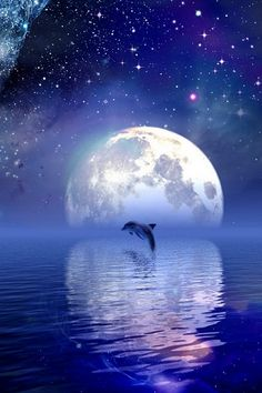 Stop the Dolphin Slaughter - these beautiful creatures need to be kept safe from the disgraceful human behaviour shown most recently by Japanese fishermen. Beautiful Creatures, Animals Beautiful, Cute Animals, Full Moon In Pisces, Ciel Nocturne, Shoot The Moon, Wale, Delphine, Moon Art