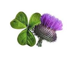 Image result for scottish thistle tattoo