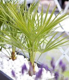 Medelhavsväxter- exotiskt ger karaktär