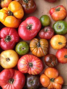 Fall colors in heirloom tomotoes www.foodforplants.com