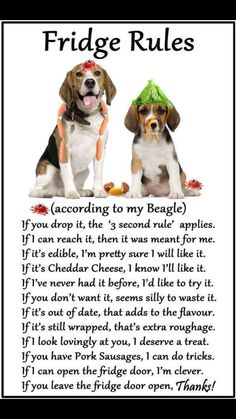 "Click visit site and Check out Cool ""Beagle"" T-shirts. This website is top-notch.  Tip: You can search your name or your favorite shirts at search bar on the top."