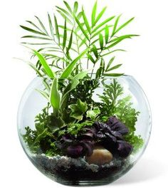 different and interesting fishbowl idea!