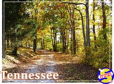 There's nothing quite like a beautiful Autumn day and a trip down a Tennessee back road. Now that's Country! On the road with Niki, Jack and Snowbird RV Trails. Back Road, Autumn Day, Tennessee, Rv, Trail, Florida, Country Roads, In This Moment, Beautiful
