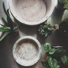 succulents and concrete terrariums