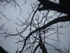 Cloudy through trees