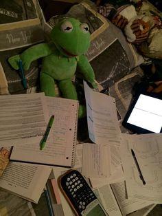 Tomorrow I have exam😂 Frog Wallpaper, Wallpaper Iphone Cute, Disney Wallpaper, Funny Kermit Memes, Cute Memes, Sapo Kermit, Reaction Pictures, Funny Pictures, Sapo Meme