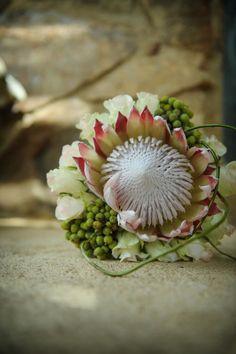 Love this native Australian wattle wedding bouquet Protea Bouquet, Protea Wedding, Floral Wedding, Bush Wedding, Dream Wedding, Bride Bouquets, Floral Bouquets, King Protea, Wedding Bride