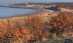 Visitor information for Gullane Bents including accommodation, things to do, attractions, events and food & drink. Scotland Uk, Days Out, Beautiful Beaches, Countryside, Landscape Photography, Things To Do, Places To Visit, Bucket