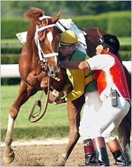 This is Charismatic, the horse that would have won the Triple Crown in 1999 if his leg hadn't broken during the Belmont. He won the Kentucky Derby and the Preakness. He managed to come in third with a broken leg. He's still alive today thanks to the quick action of Chris Antley who hopped off and held his leg till the vets arrived. Charismatic is in Japan but will return to the USA so he doesn't share the same fate as Ferdinand. He's also sabino.
