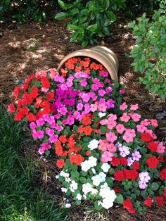awesome Striking Petunia Centerpiece Ideas for Garden Design and Yard Landscaping Garden Yard Ideas, Garden Projects, Back Gardens, Outdoor Gardens, Amazing Gardens, Beautiful Gardens, Beautiful Flowers Garden, Front Yard Landscaping, Landscaping Ideas