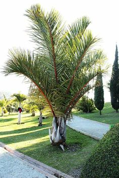 Croton Plant Care, Tropical Plants, Palm Trees, Most Beautiful, Sidewalk, Villa, World, House, Hanging Pots