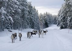 Winterurlaub in Schweden: Småland