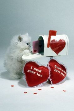 """My """"furry"""" Valentine Kittens Cutest, Cats And Kittens, Cute Cats, 85th Birthday, Birthday Wishes, Birthday Celebration, Valentines Day Cat, Happy Valentines Day, Baby Animals"""