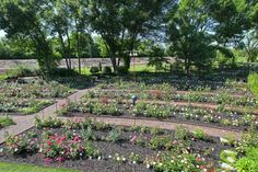 Extensive rose gardens in a yard.