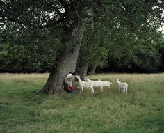 Ieva epnere Countryside, Goats, Photography, Animals, Fotografia, Animais, Fotografie, Animales, Animaux