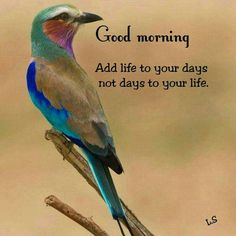 Good Morning Wishes Friends, Good Morning Msg, Happy Morning, Good Morning Photos, Good Morning Messages, Morning Quotes Images, Morning Greetings Quotes, Good Morning Motivation, Good Night Flowers