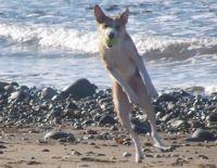 Nine Dog-Friendly Beaches of Snowdonia   Snowdonia Mountains and Coast