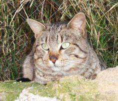 MOISSY - Gato adoptado - AsoKa el grande