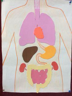 Human body / iç organlarımız 2. Sınıf pano