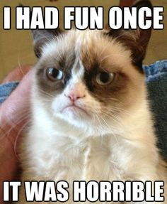 20 of the best Grumpy Cat #Memes