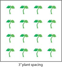 Plant Spacing for Square Foot Gardening: Includes a chart of vegetables and the number to plant per square, with sample diagrams. Explains how spacing is calculated. Most workable plant spacing found so far! Garden Yard Ideas, Garden Spaces, Garden Beds, Garden Plants, Raised Vegetable Gardens, Home Vegetable Garden, Container Gardening Vegetables, Planting Vegetables, Veggies