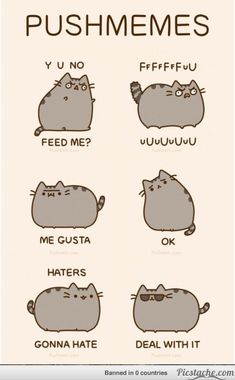 Image result for hi reasons u should become a cat pusheen