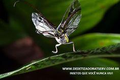 INSETOS QUE VOCÊ NUNCA VIU!  www.dedetizadoratserv.com.br