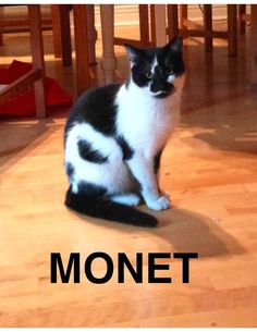 MONET is available for adoption in #Montreal via C4P <3 www.facebook.com/cause4paws