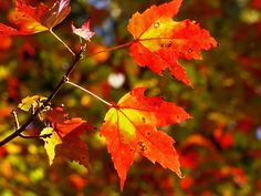 From Beech to Maple: Fall Foliage in Ohio