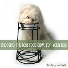 Choosing The Best Fo