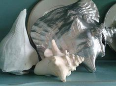spray painted conk shell and a great shell display.  More pics. Camp Clem,