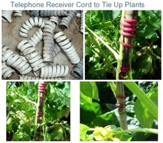 Garden ties using old telephone cords, cut into pieces about 5 curls per piece. Cheap, works well, expands with the plant and can be re-used  via thriftyfun.com