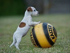 He doesn't care how big the ball is.