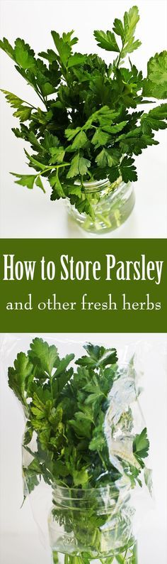 How to Store Parsley, Cilantro, and Other Fresh Herbs ~ Have you ever had trouble keeping fresh herbs fresh? This super easy trick keeps fresh herbs useable for a couple of weeks. ~ SimplyRecipes.com