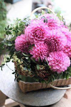 Beautiful Flower Arrangements, Floral Arrangements, Beautiful Flowers, Plant Art, Flower Basket, Southern Charm, Flower Fashion, Ikebana, Art Music