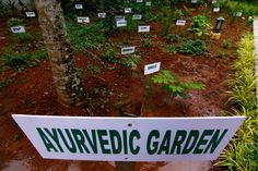 Ayurveda means 'Science of Life'. It deals with each and every aspect of human life. It's first objective is to maintain the health and happiness while the next is to manage and restore the status of health and productive state of mind. Ayurveda offers wonderful tools for better life style. It gives equal importance to our body, mind and soul. Ayurveda is the soul and essence of Hill Gardens. At Hill Gardens, most of the Ayurvedic Herbal Medicines and Vegetables are Organic and are grown…