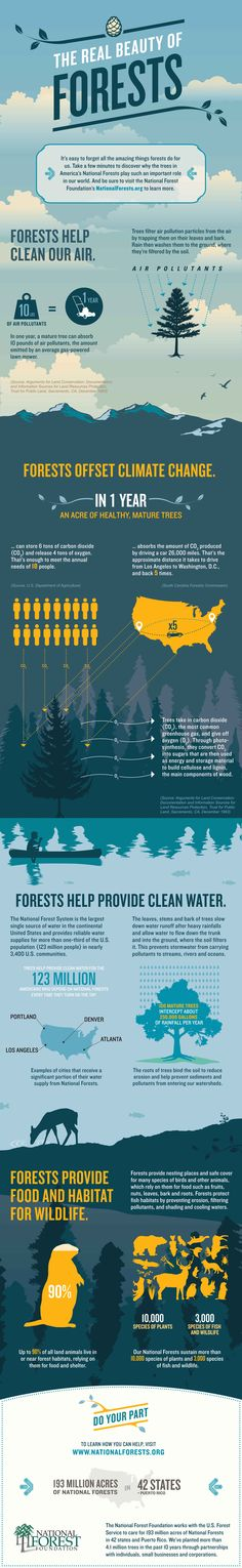 The Many Benefits of Forests