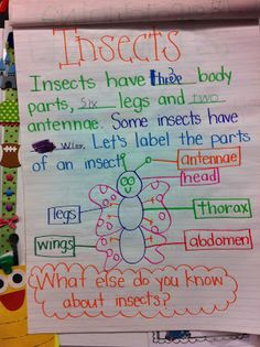 Welcome to Room 36!: insects
