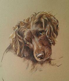 boykin spaniel dog portrait pet portrait painting art