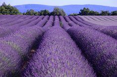 Voyage en France (Provence-Alpes-Côte d'Azur) - Vacances en France (Provence-Alpes-Côte d'Azur) sur mesure Beautiful World, Beautiful Places, Stuff To Do, Things To Do, Paradise Places, Provence Lavender, Lavender Tea, Flower Landscape, Provence France