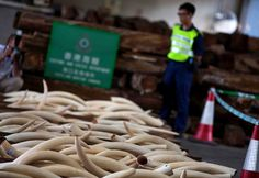 #POACHING #SWD #GREEN2STAY 'Thankyou,(Under 2 Min Video) Hong Kong's illegal ivory trade still alive, despite pledge