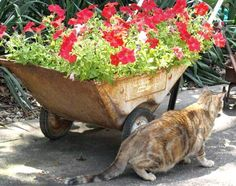 Petunias in vintage garden carts. Who's sneaking by?