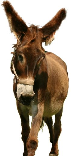 All about donkeys & mules