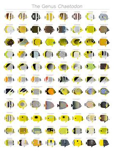 Red sea fishes water creatures pinterest sea fish red sea and jevajeva fishes in the genus chaetodon family chaetodontidae butterflyfishes larger version fish fandeluxe Choice Image
