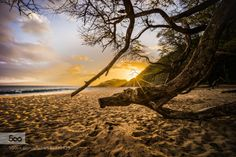 Beached by tristan  water beach big beach bigbeach branches hawaii island islands maui ocean pacific sand sandy sunset s