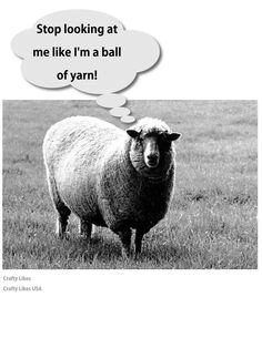 "Stop looking at me like I'm a ball of yarn."" -sheep"