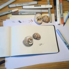 My messy table and the seashells sketch from last weekend. This week I plan to sketch buttons. Luckily I have many. . . . . #supportart #showyourwork #workingprogress #drawingchallenge #creativeprocess #seashell #markerart #realisticdrawing #pragueart #artistofinstagram #topcreator #creativeart #copicsketch #sketchflashmob2017